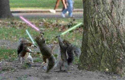 jedi_squirrel